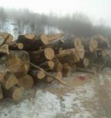 Rod_mat lemnos